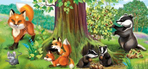 Почему барсук и лиса в норах живут