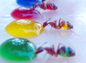 Почему у муравьёв кривые ноги