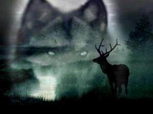 Волк и олень