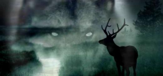 Волк и олень сказка